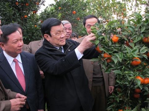 Chủ tịch nước thăm vùng cam Cao Phong