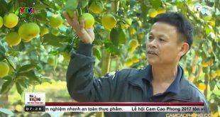 Thương hiệu cam Cao Phong lấy chất lượng làm gốc